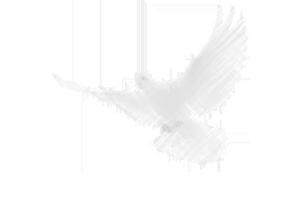Bird Graphic 1