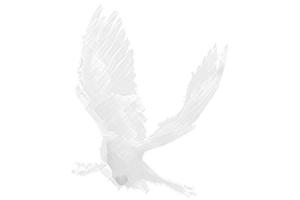 PRN Bird Graphic 2